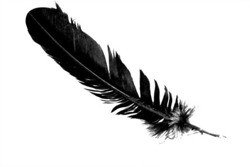 Symbol meaning of seeing a black feather transition or for Thin line tattoo artists near me