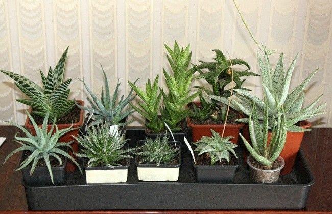 9 incredibili piante da interno che ripuliscono l 39 aria - Piante da interno purifica aria ...