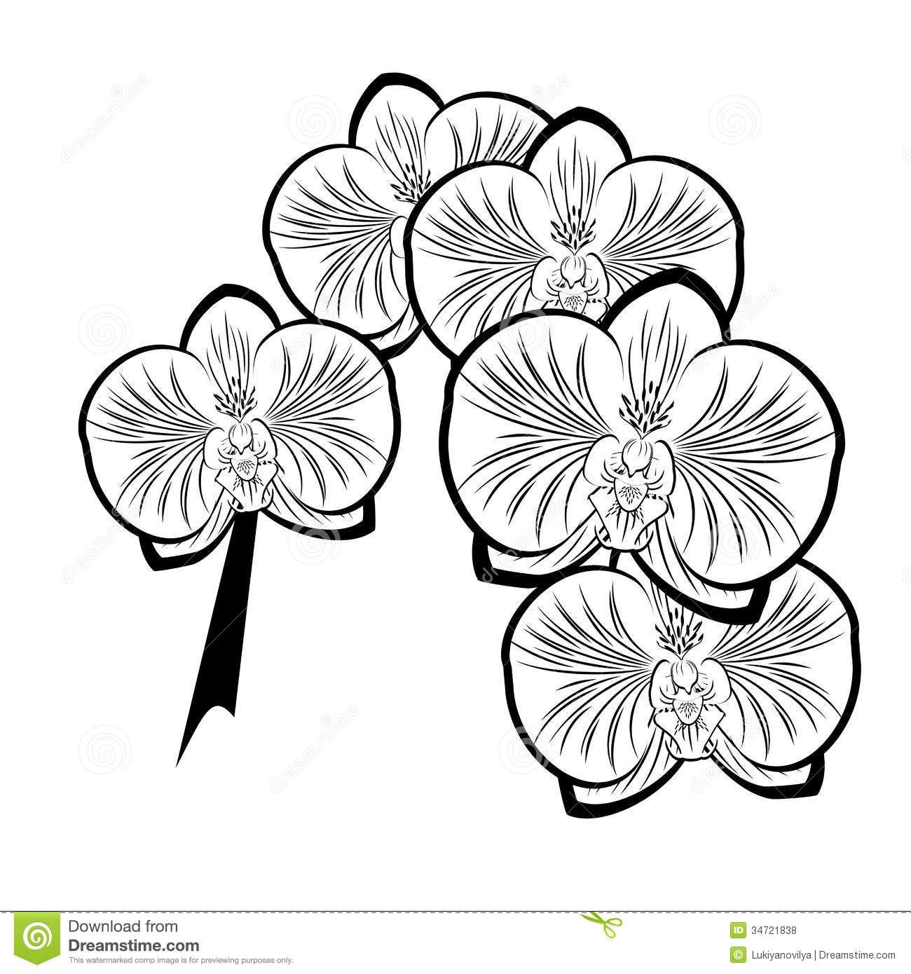Black And White Drawing Of Orchid Flowers Royalty Free Stock