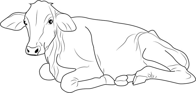 Free Cow Coloring Pages Printable Cow Coloring Pages Adult