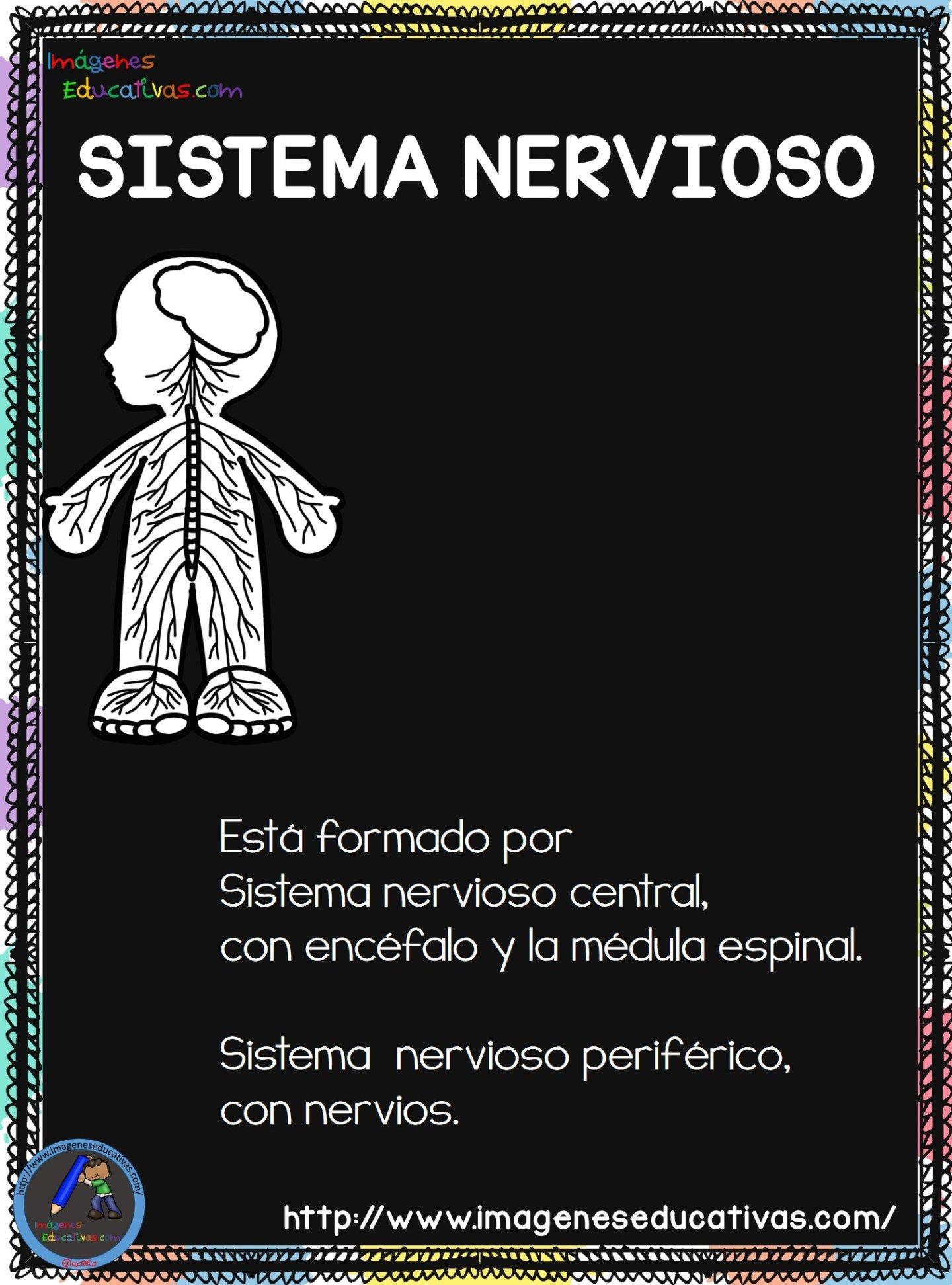 Cuaderno del Cuerpo Humano; Aparatos y Sistemas para trabajar en Primaria |  Sistemas del cuerpo humano, Cuerpo humano, Aparatos del cuerpo humano