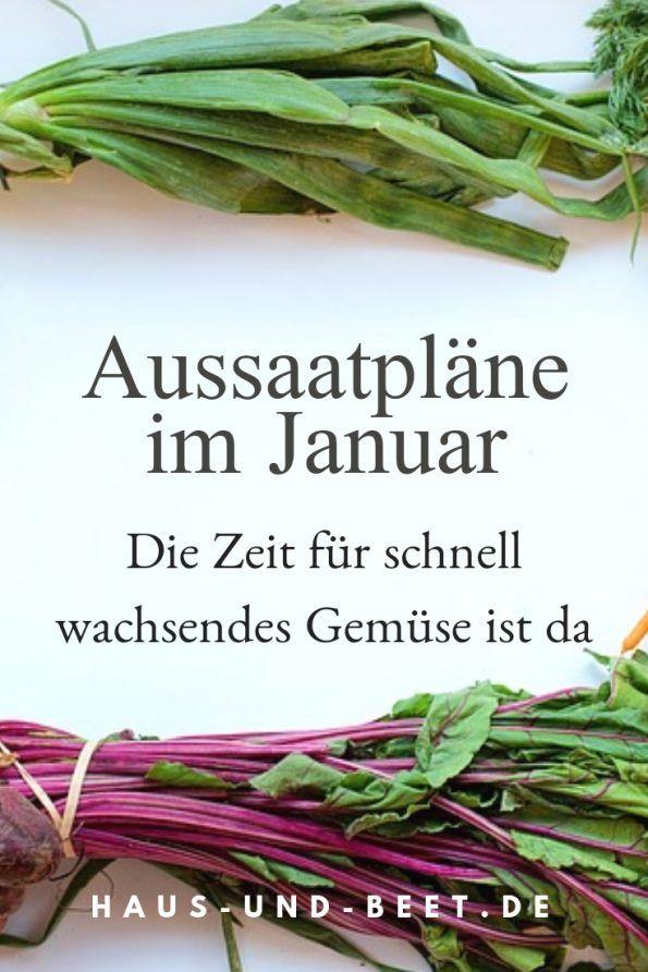 Aussaatpläne im Januar Im Frühjahr kannst du schnell wachsendes Gemüse ernten Säe jetzt Salat Küchenkräuter und mehrere Blumen aus Saat f&uu...