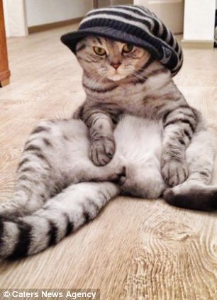 sit down next to meeow cat's humanlike sitting pose