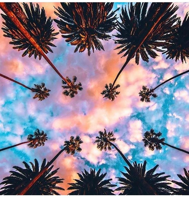 Gorgeous Los Angles Sunset And Those Iconic Hollywood Palms From Paolo Fortades