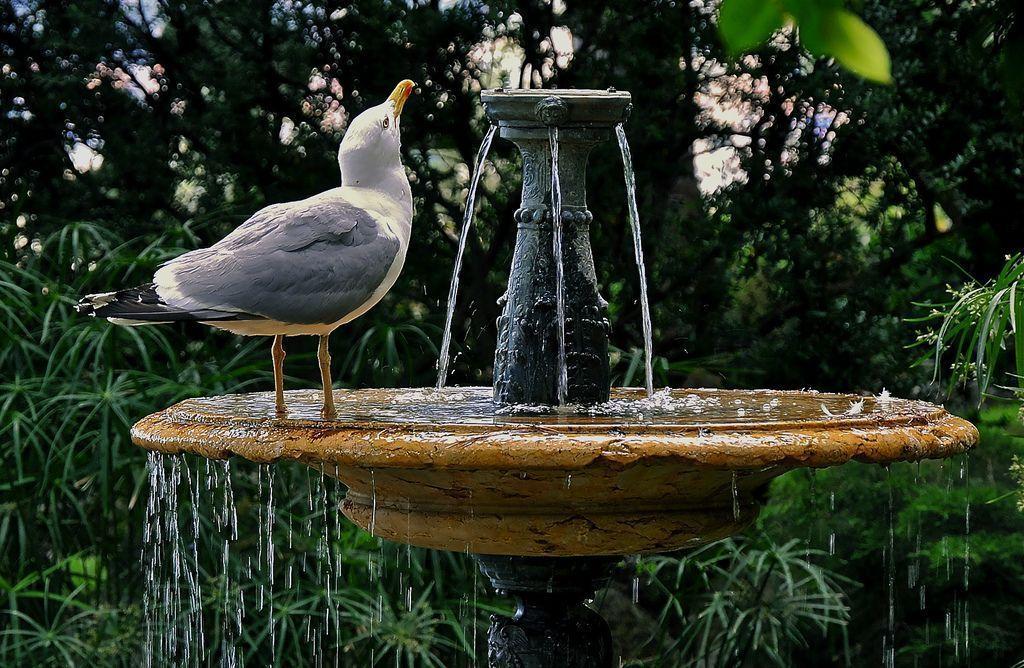 I'm Thirsty #i'mthirsty I'm Thirsty #imthirsty I'm Thirsty #i'mthirsty I'm Thirsty #imthirsty I'm Thirsty #i'mthirsty I'm Thirsty #imthirsty I'm Thirsty #i'mthirsty I'm Thirsty #imthirsty