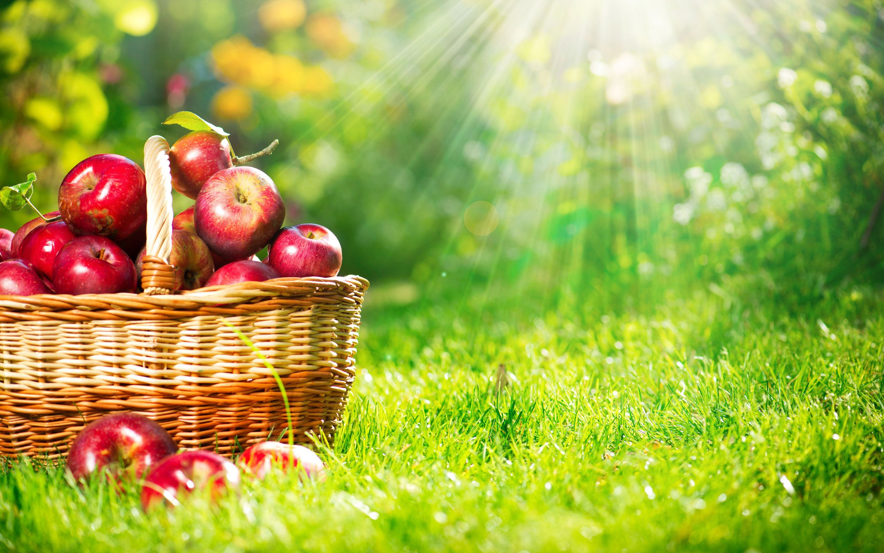 apple fruit wallpapers find best latest apple fruit wallpapers in hd for your pc desktop