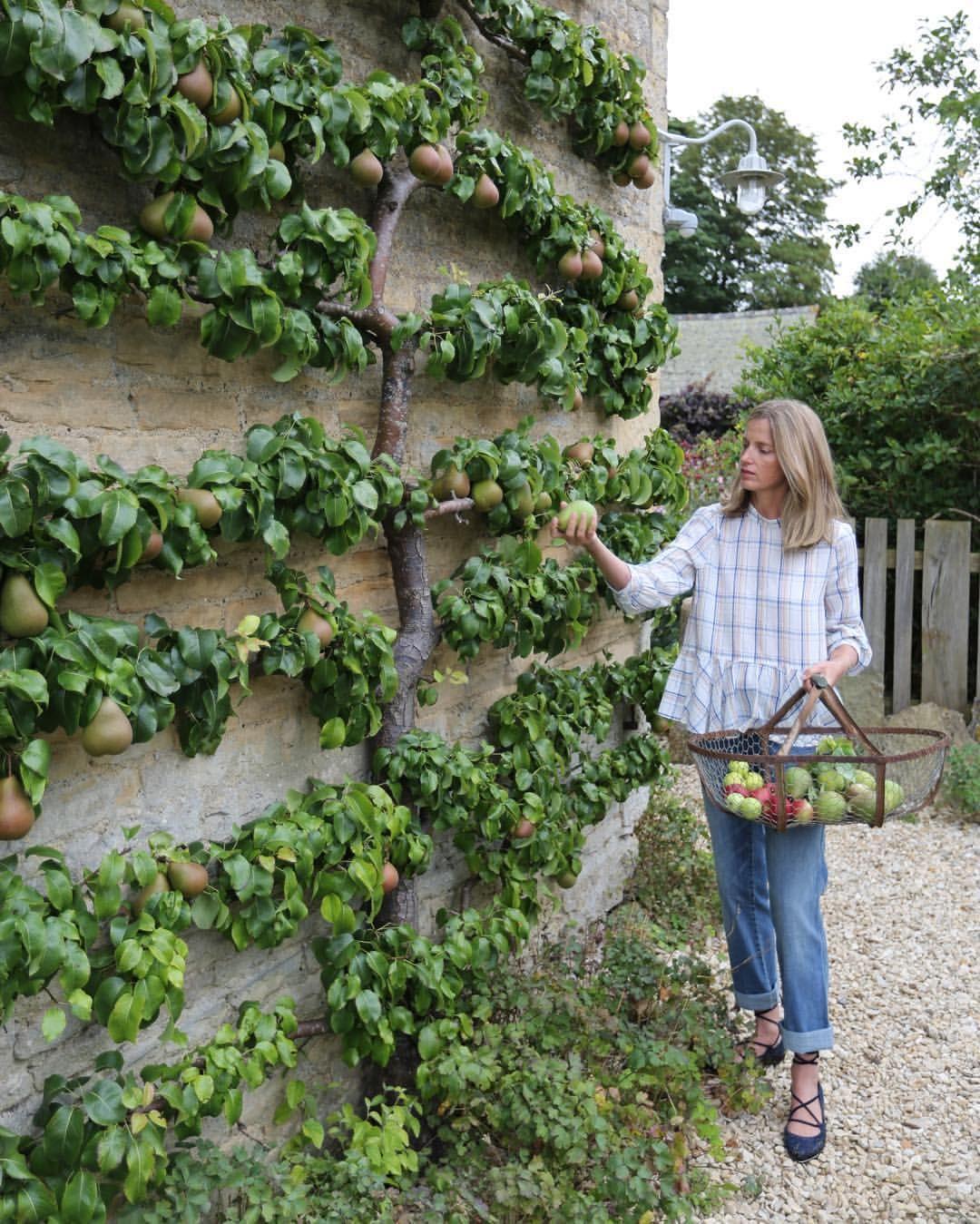 Les Arbres Fruitiers En Espalier Sont Particulierement Adaptes Aux