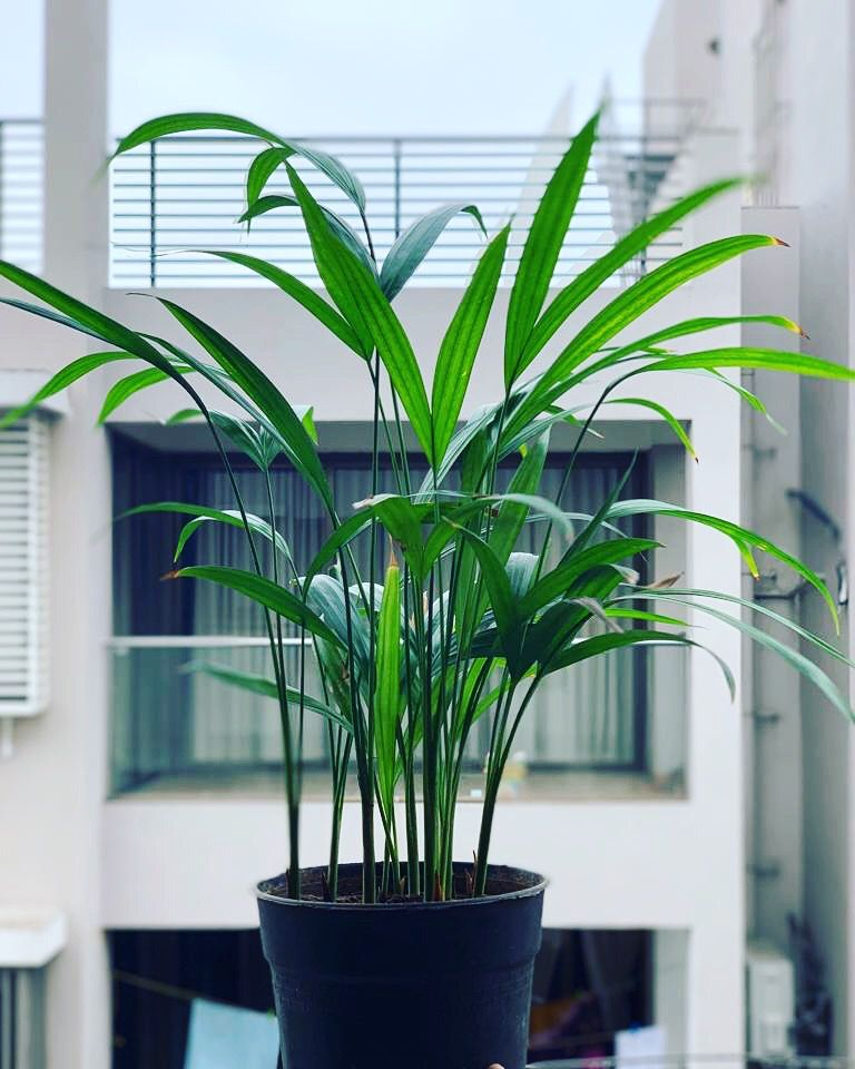 Air purifier plant indoor plants plants air purifying