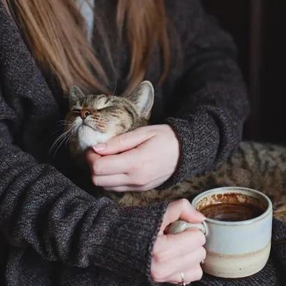 (3) Одноклассники Самые милые животные, Кошачьи