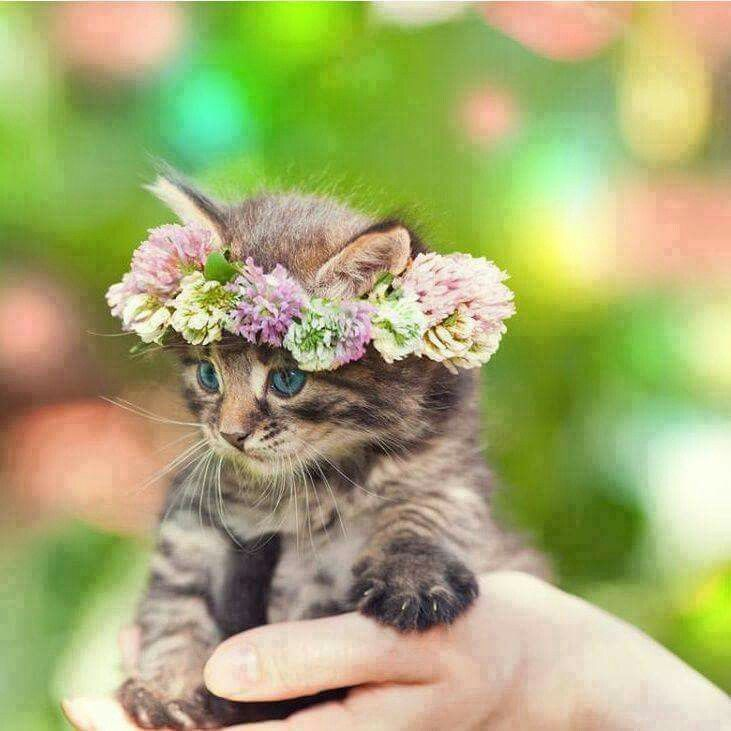 Милые картинки котят с цветами
