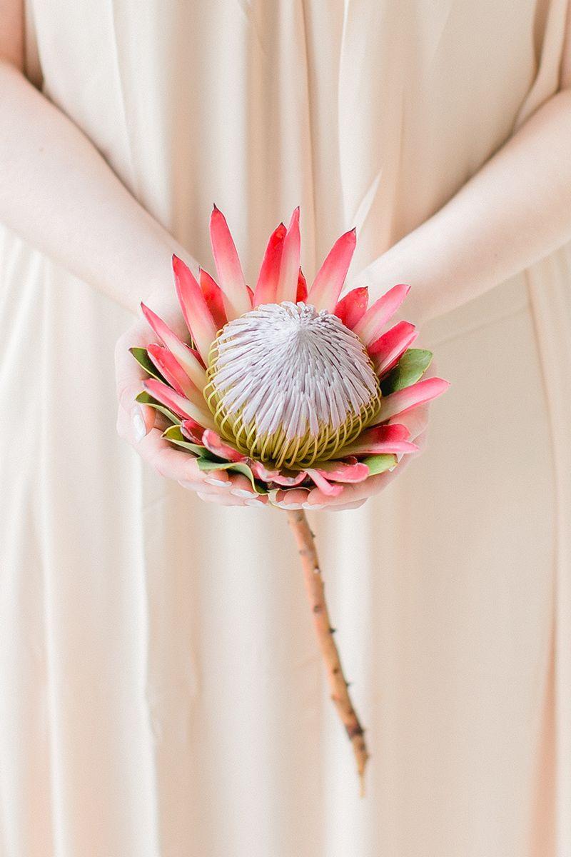 Blume Des Monats Januar Protea Hochzeit Exotisch Flowers