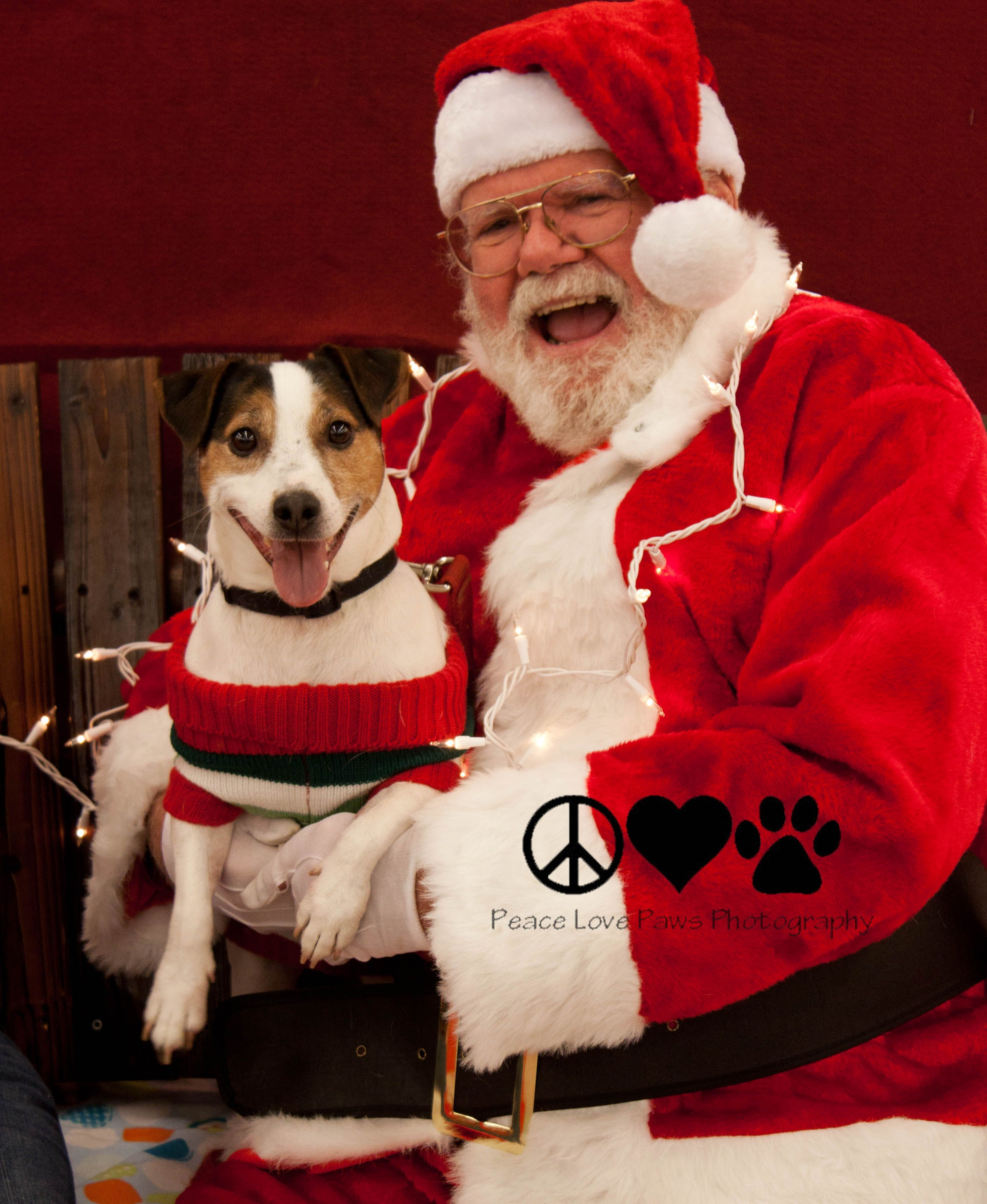Dog Pictures In Horsham With Santa