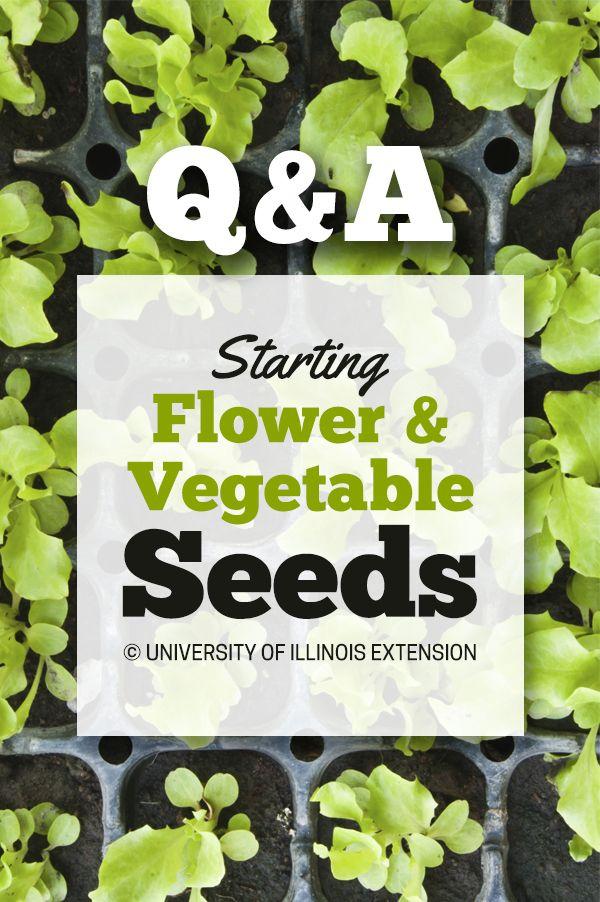 Qu0026A: Starting Flower U0026 Vegetable Seeds