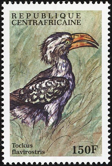 Eastern Yellow-billed Hornbill stamps - mainly images - gallery format