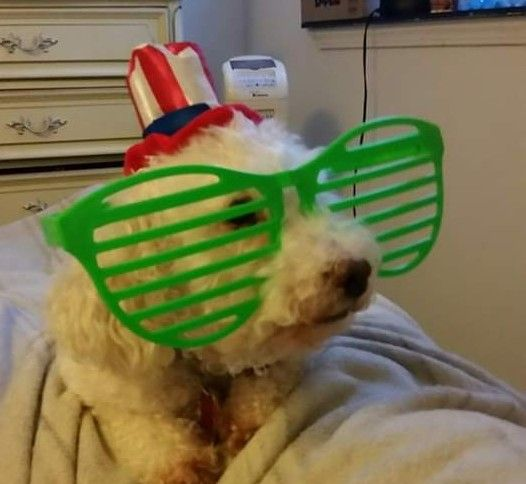 🐶📌Motley is a super cute Miniature Poodle.  His owner Monica says,