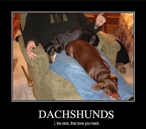 There I Fixed The Poor Word Choice On This Poster Funny Dachshund Dachshund Love Dachshund Memes