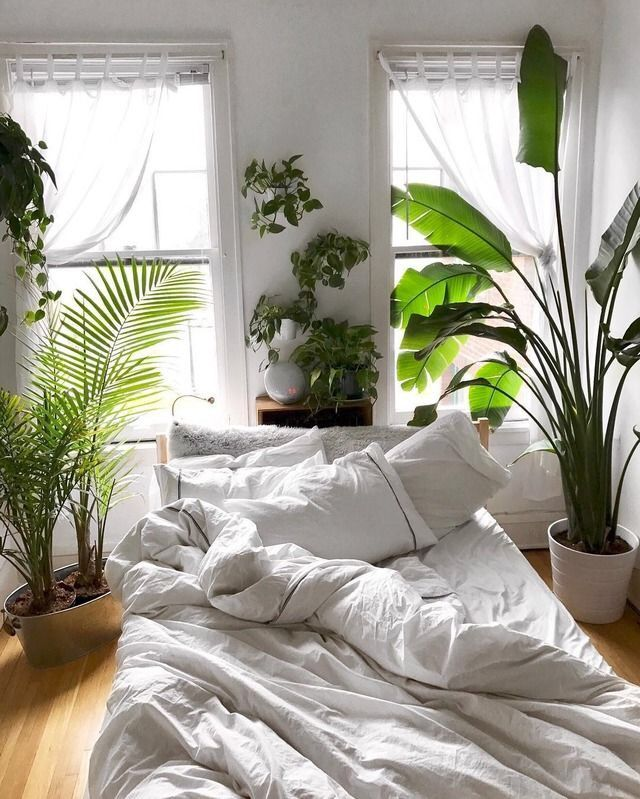 Pin de Jacq Streur en Appartment Pinterest Plantas interior - decoracion de interiores con plantas