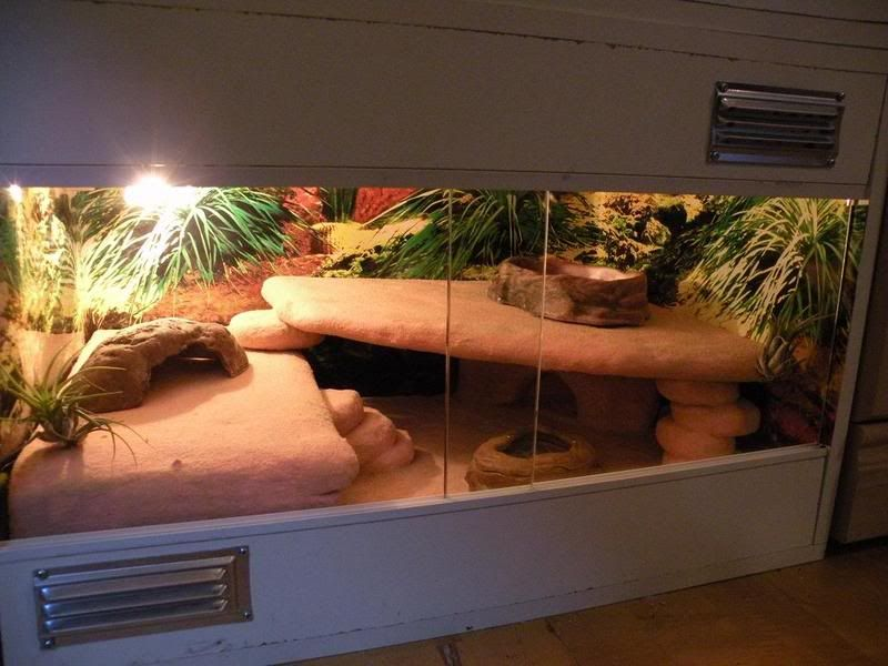 Best 25 Leopard Gecko Habitat Ideas On Pinterest Gecko
