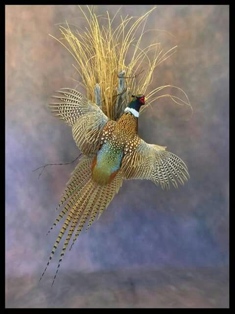 Pin On Taxidermy