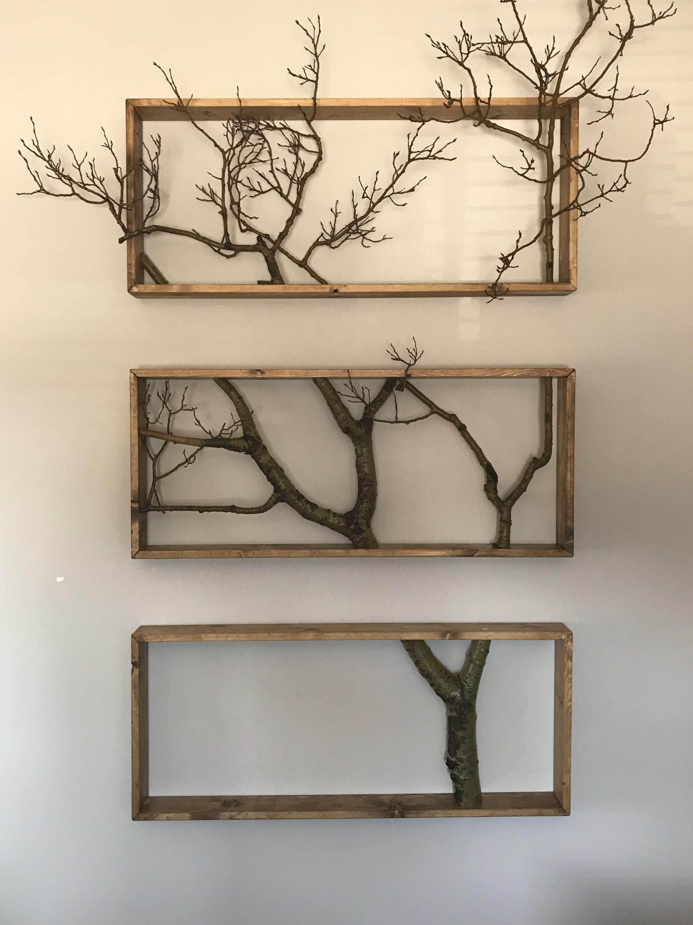 Pine frames and poplar tree top -