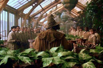 Neville Longbottom Chamber Of Secrets