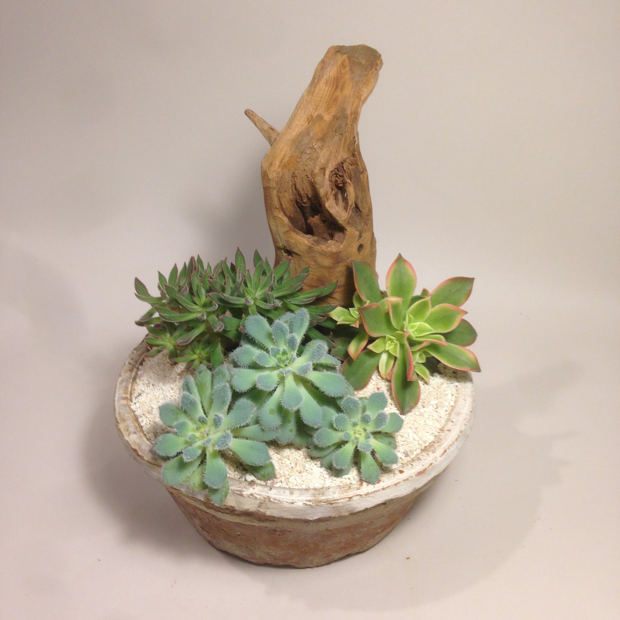 Succulents Ideas