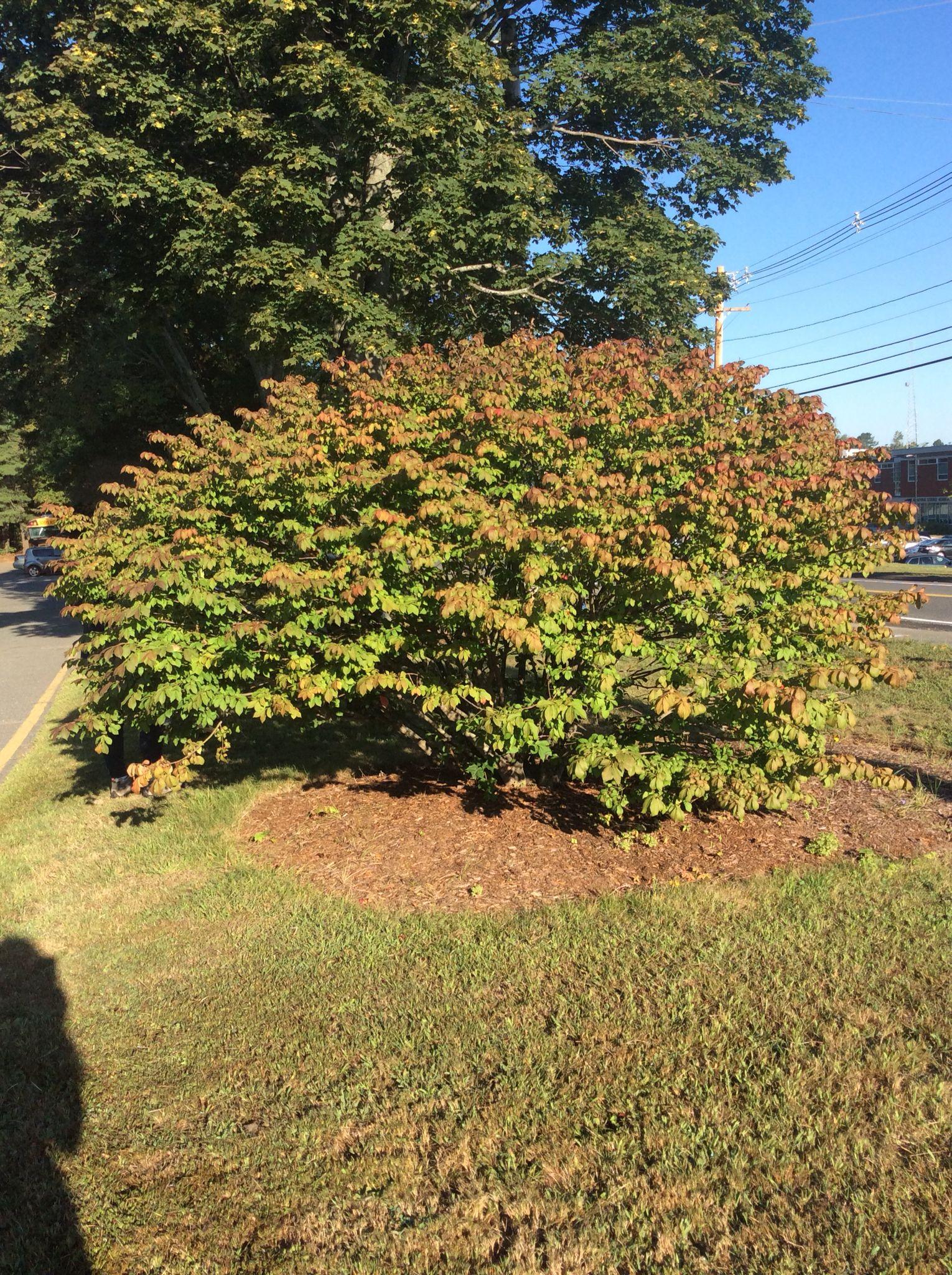 pics mature full bush