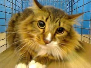 Pin On Ny Nj Cats And Critters In Dire Need For Rescue Foster Oradoption