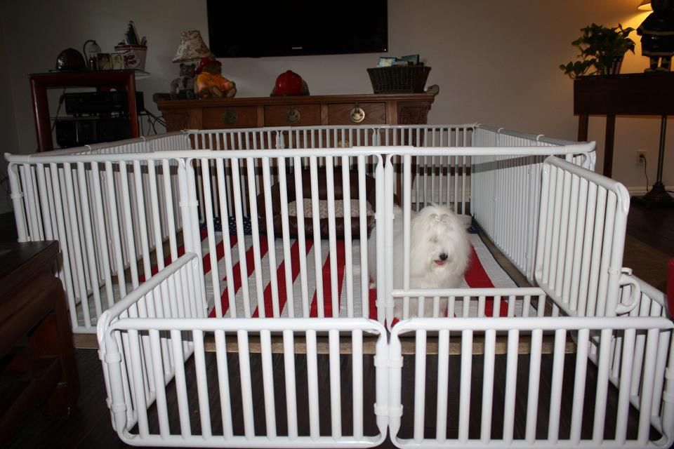 How To Make Your Own Puppy Pen Out Of Pvc Pipes Source Michele