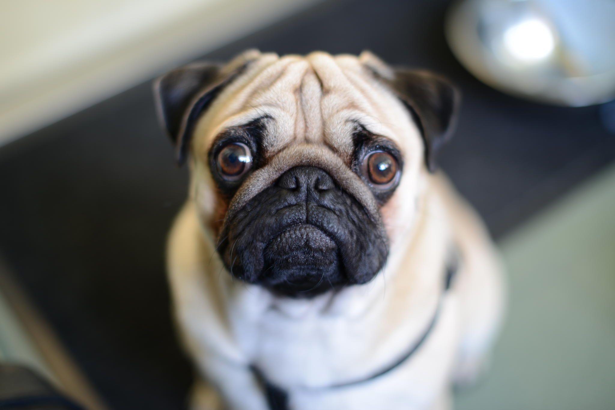 Gryts the pug - null