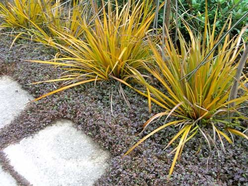 colourful natives gardens te ara encyclopedia of new zealand - Native Garden Ideas Nz