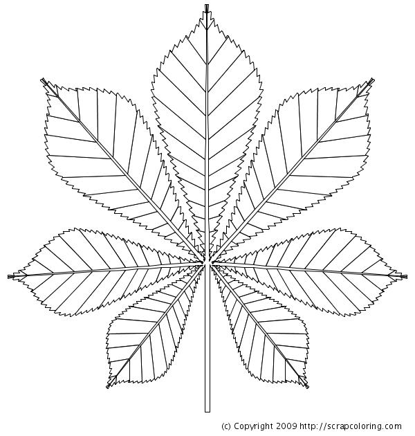 Kastanienblatt Ausmalbild