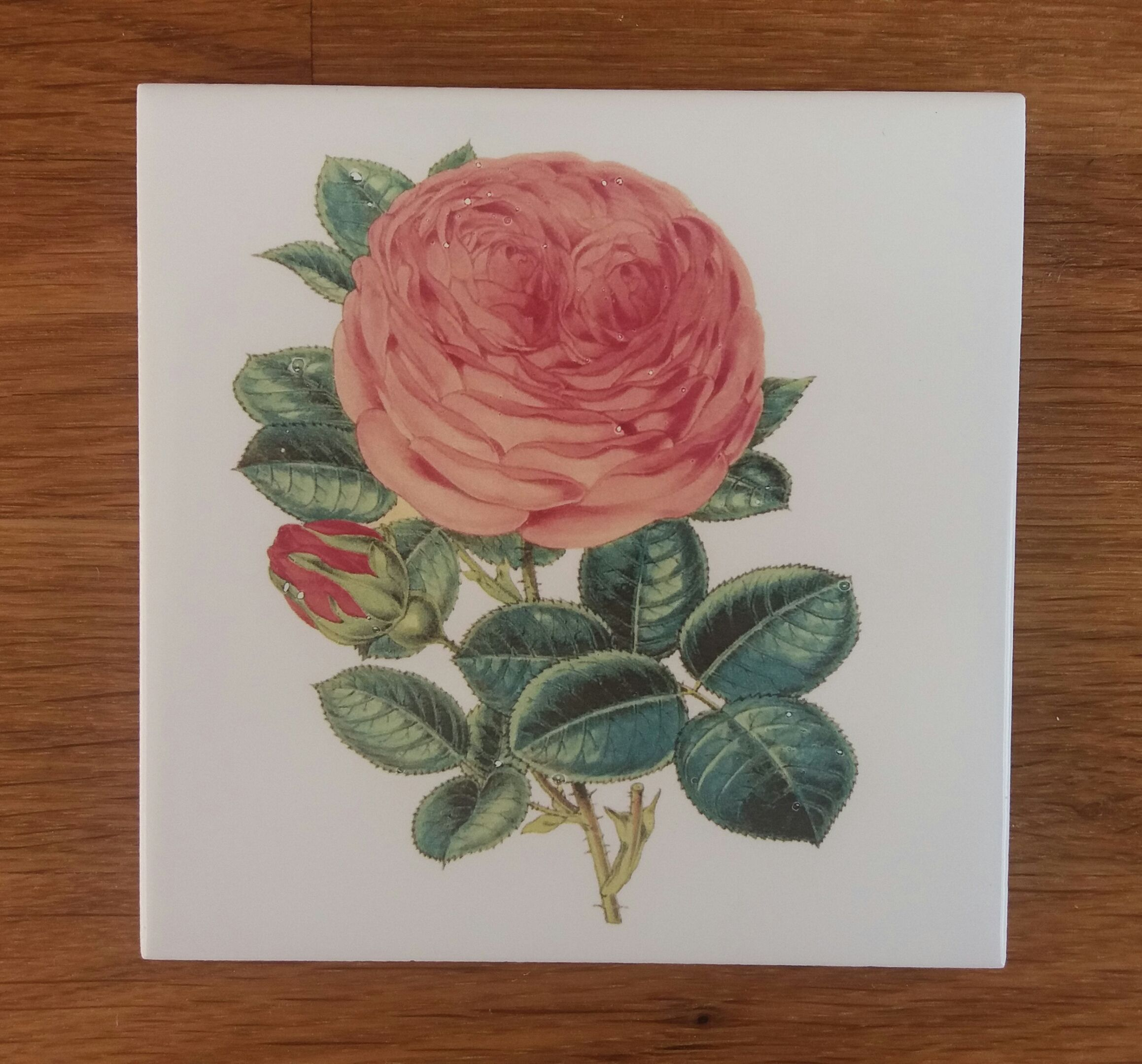 Old Fashioned Pink Rose Ceramic Wall Tile Ceramic wall