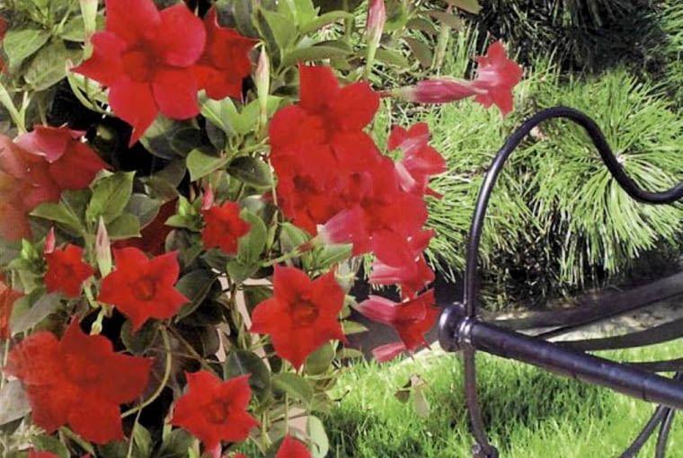 Najlepsze Kwiaty Na Balkon Jakie Rosliny Sprawdza Sie Na Balkonie In 2020 Plants