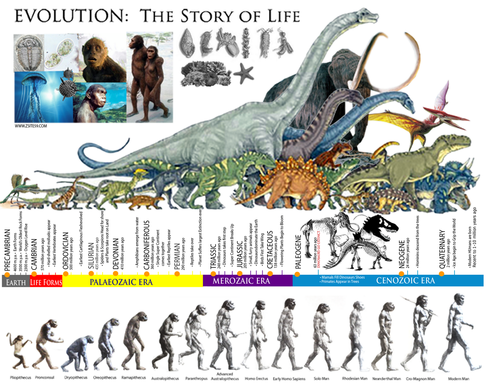 evolution of science Not everyone who accepted an ancient earth necessarily accepted biological evolution by the early 19th century, the professional scientists and leisurely gentlemen who dabbled in geology or comparative anatomy entertained a variety of explanations for humanity's predecessors evolution was one explanation, but many.