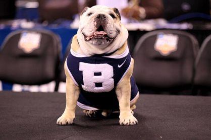 Best Colleges For Basketball Fans Bulldog Mascot Butler