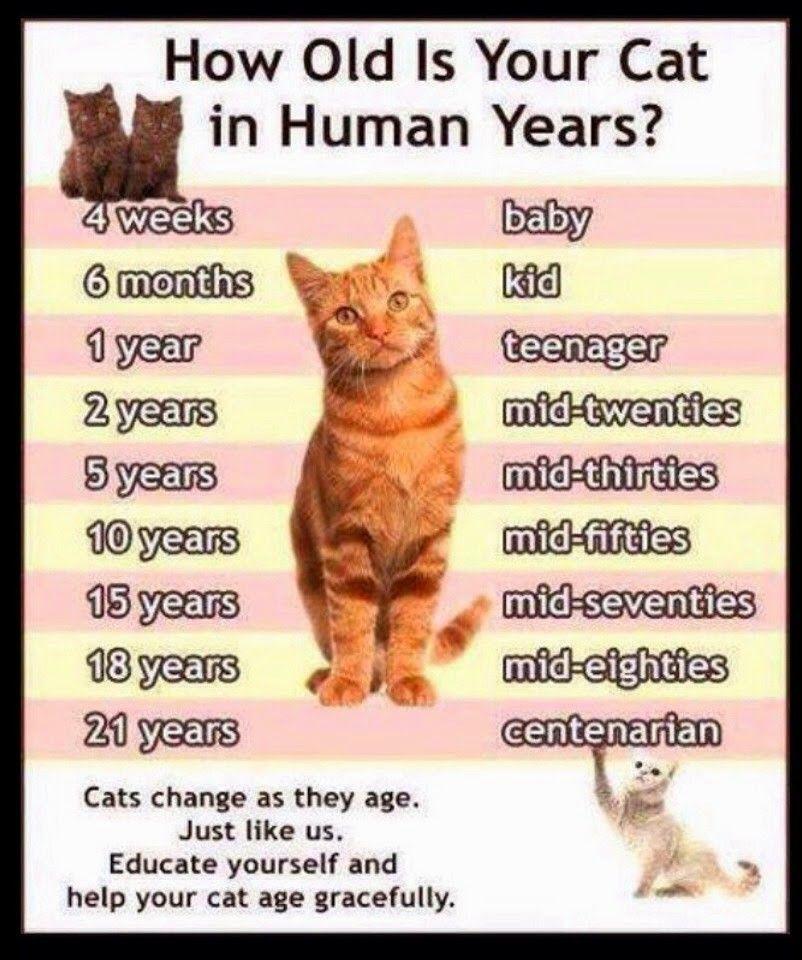 Cat Ages