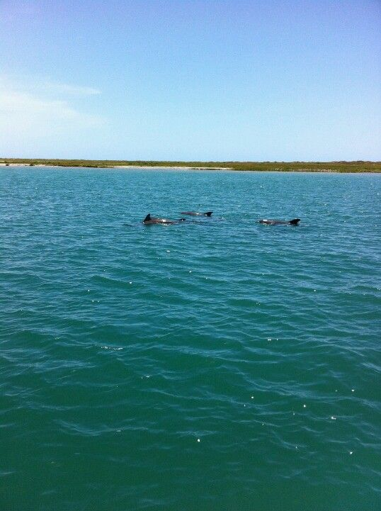 Dolphin Watching At Mustang Island Places I Want To Visit