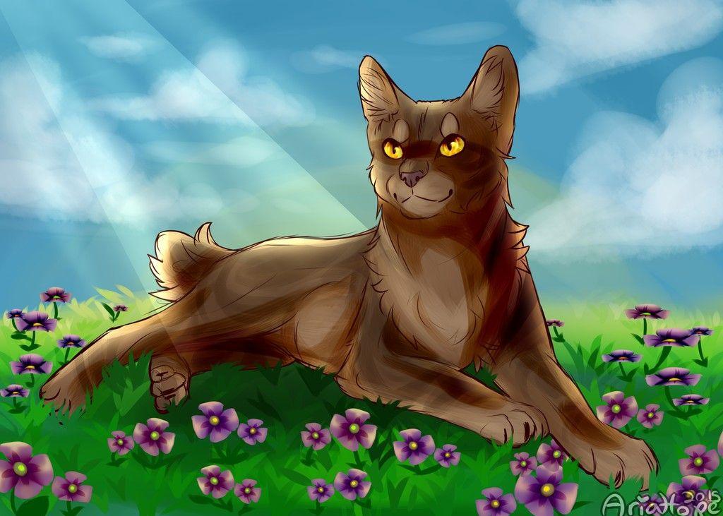 Barkfacewindclan medicine cat warrior cat drawings