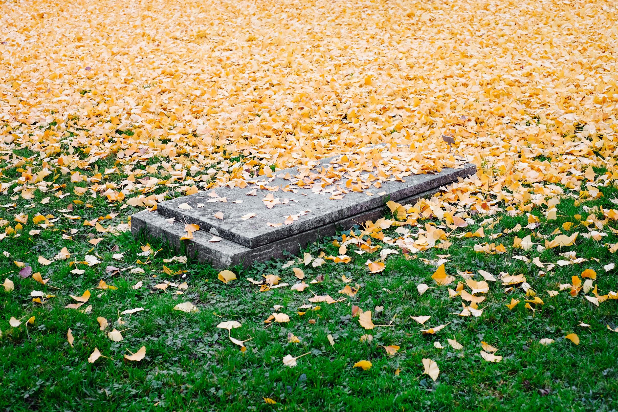 Is There Such a Thing As a Pet Cemetery? Pet cremation