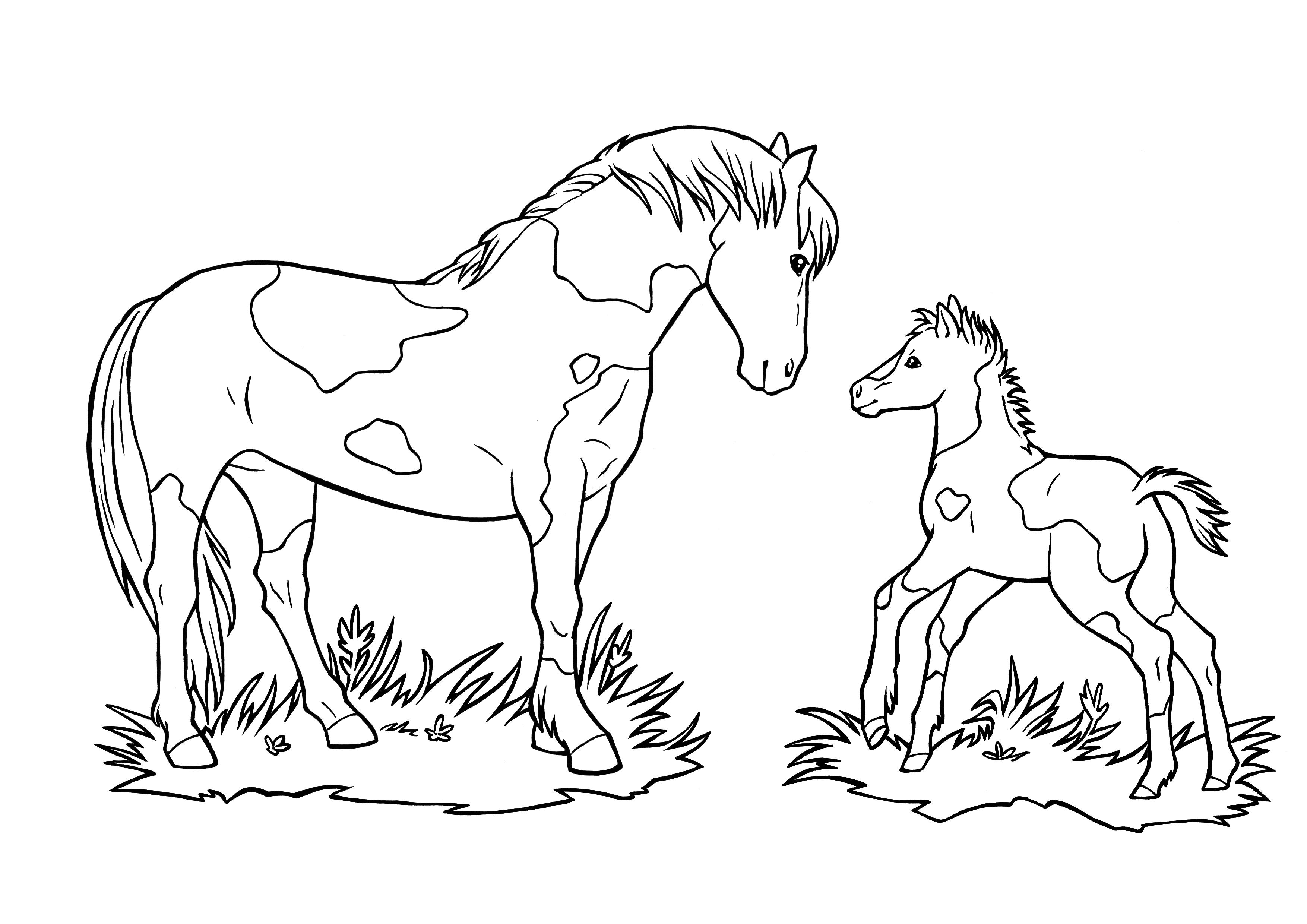 Pferd Mit Fohlen  Ausmalbilder pferde, Fohlen, Ausmalbilder
