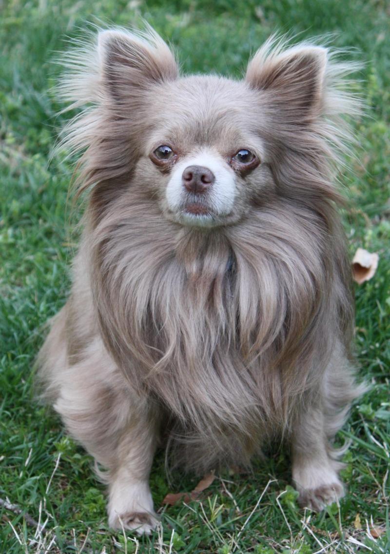 Adopt Tiko on (With images) Pets, Pomeranian dog, Animals