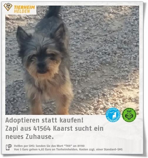 Zapi wird im Namen des Tierschutzverein Neuss vermittelt