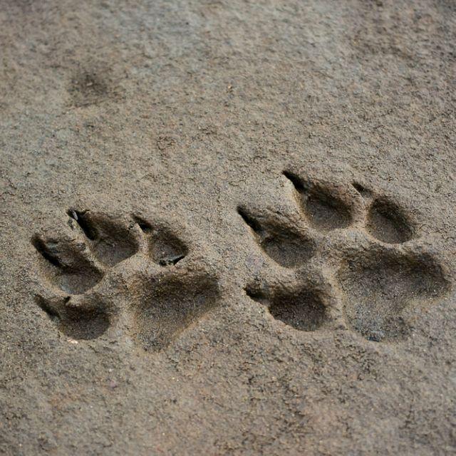 James Kimmet Or Sirius Howling Werewolf Sirius Black Maia Roberts
