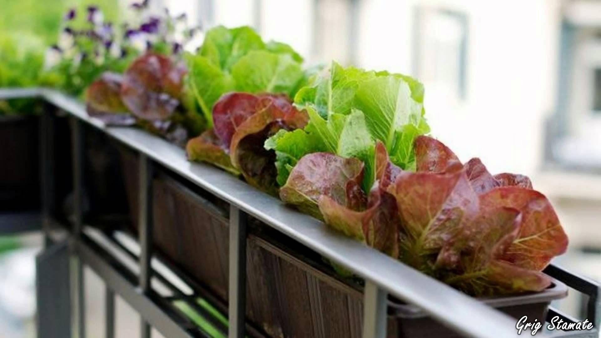 Home vegetable garden design  Balcony Vegetable Garden Ideas for Apartments  Lets go green