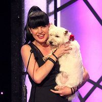 Celebrity Adopters Celebrity Dogs Dog People Westies