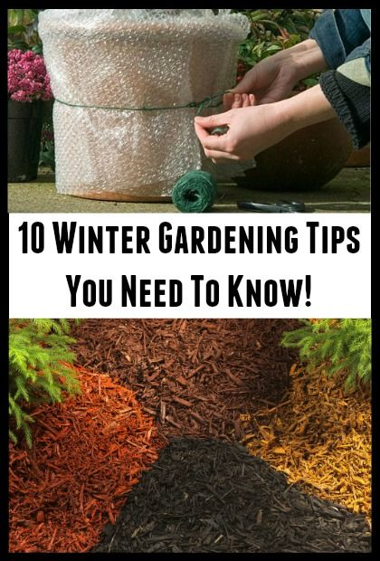 10 Winter Gardening Tips You Should Know #wintergardening