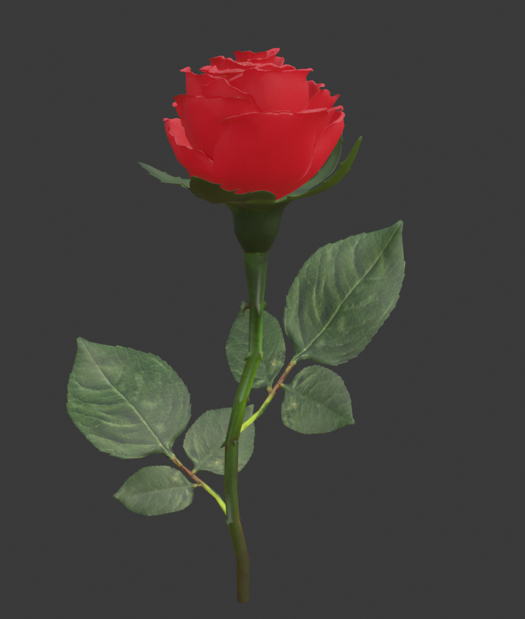Realistic 3d Rose Flower With Blooming Rig Rose Flower Bloom Flowers