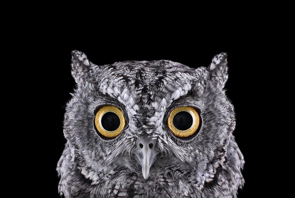 Incredible Studio Portraits Of Wild Animals By Brad Wilson: Pin By Jay De Alwis On B E A U T I F U L