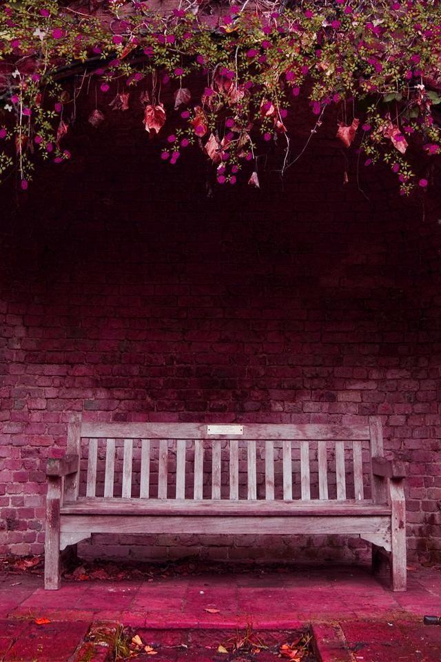 Pink paradisebench